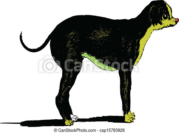 Vector image of an dog on white bac - csp15783926