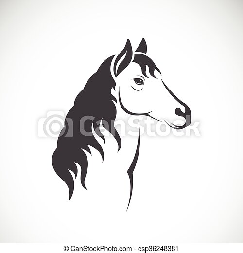 Vector image of an horse  - csp36248381