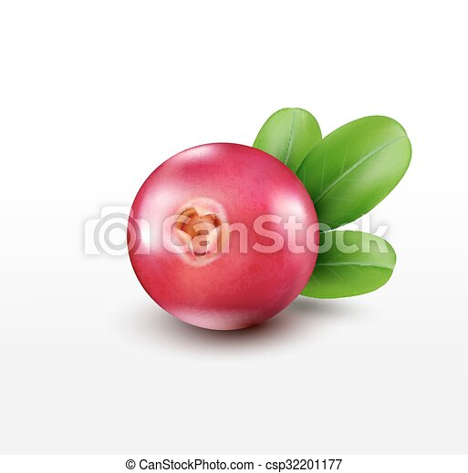 Vector isolated cranberries on a white background - csp32201177