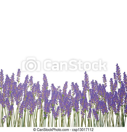 Vector Lavender Background - csp13017112