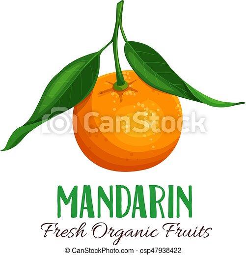 Vector mandarin illustration - csp47938422
