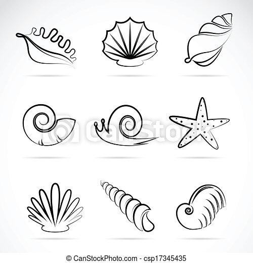 Vector, mar, colección, caracol, conchas.