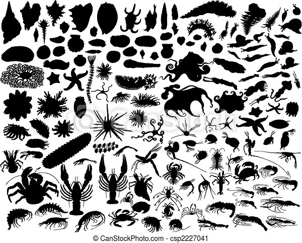 vector mollusks - csp2227041