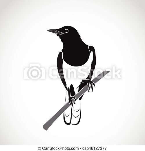 Vector of bird on white background. Oriental Magpie Robin (Copsychus saularis) - csp46127377