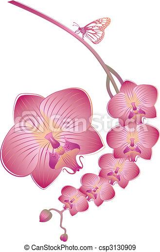 vector orchid - csp3130909