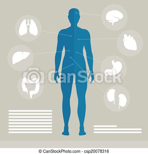 vector, organen, menselijk - csp20078316