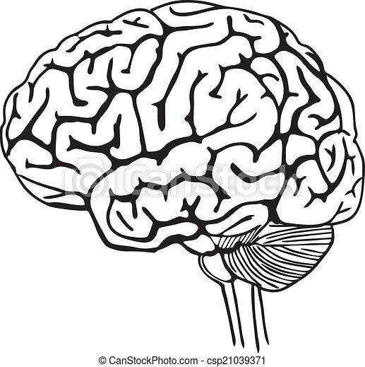 vector outline illustration of human brain on white vectors rh canstockphoto com  brain vector art free download