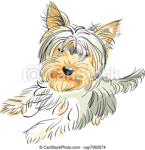 vector pedigreed dog Yorkshire terrier - csp7060574