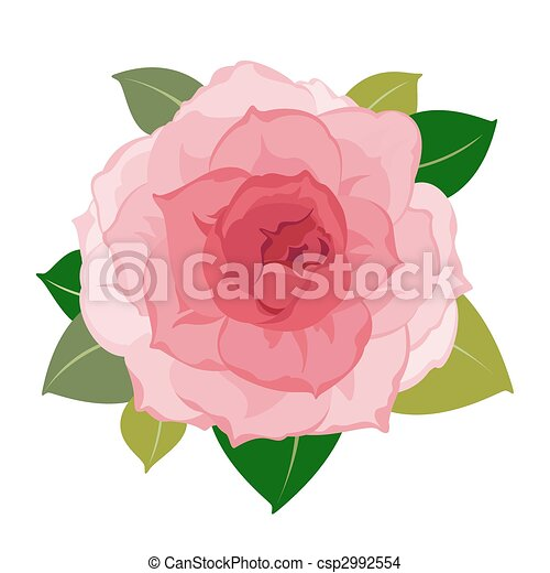 vector peony flower closeup vector detailed pink peony flower rh canstockphoto com peony clip art free peony images clip art