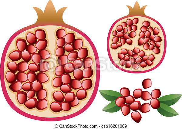 vector pomegranate with grains and leaves vector vegetarian rh canstockphoto com pomegranate clipart images pomegranate clipart png