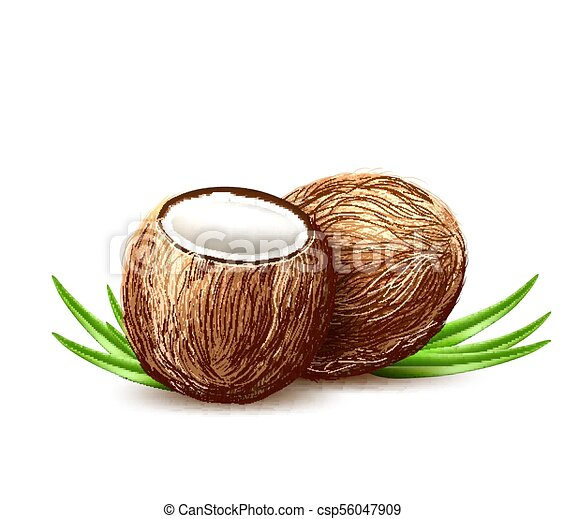 Vector Realistic Coconut Exotic Leaves Fruit 3d Coconut Exotic