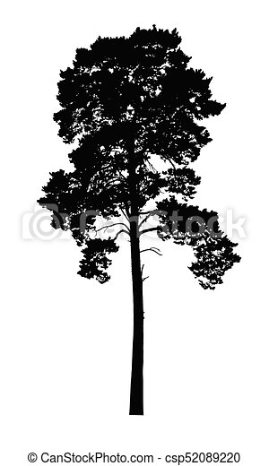 Vector realistic silhouette of coniferous tree isolated - csp52089220