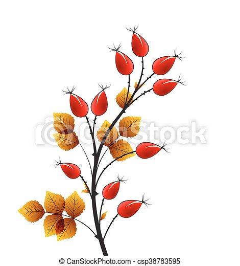 Vector rose hip - csp38783595