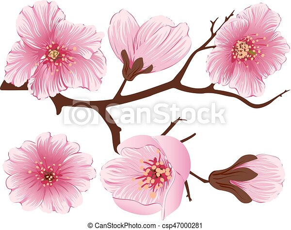Vector sakura flower branch element elegant element for your design vector sakura flower branch element elegant element for your design detailed illustration of mightylinksfo