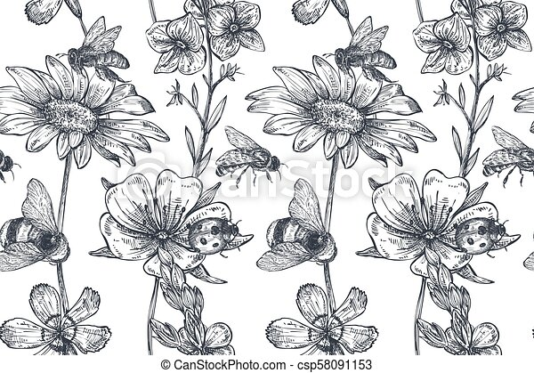 Vector seamless pattern with hand drawn chamomile, wildflowers, herbs, bee - csp58091153
