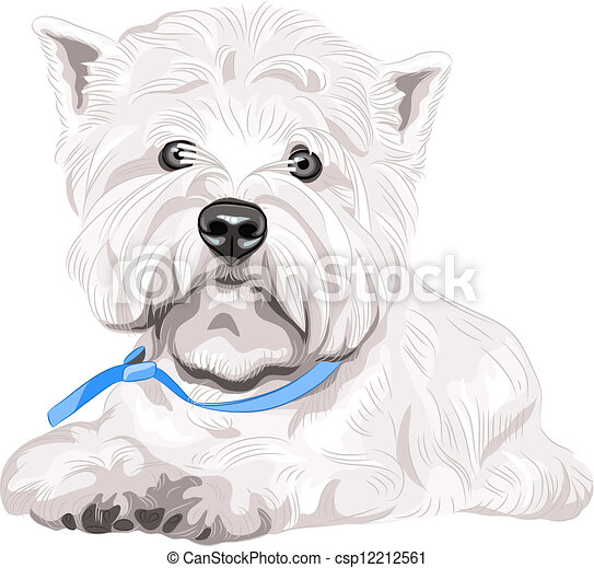 vector serious dog West Highland White Terrier breed sitting - csp12212561