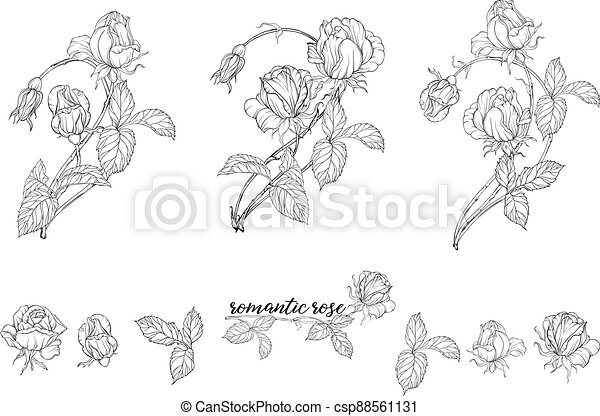 Vector set of flower compositions with rose flowers. - csp88561131
