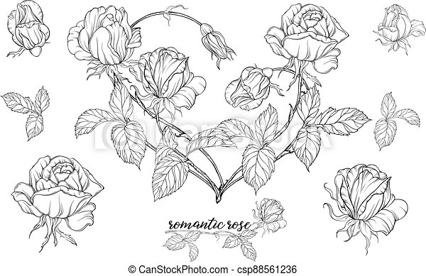 Vector set of flower compositions with rose flowers.Heart of flowers. - csp88561236