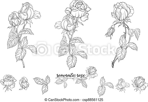 Vector set of flower compositions with rose flowers. - csp88561125