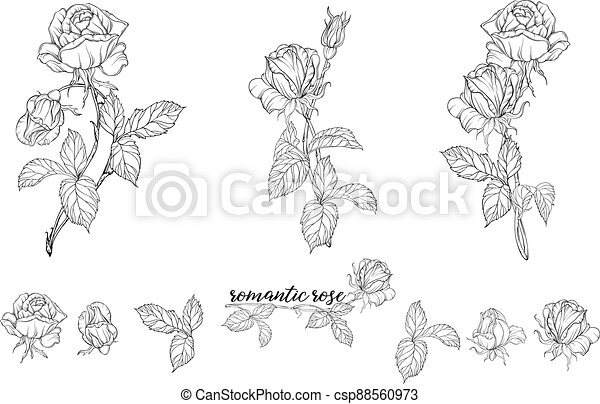 Vector set of flower compositions with rose flowers. - csp88560973