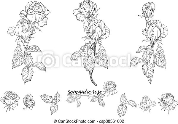 Vector set of flower compositions with rose flowers. - csp88561002