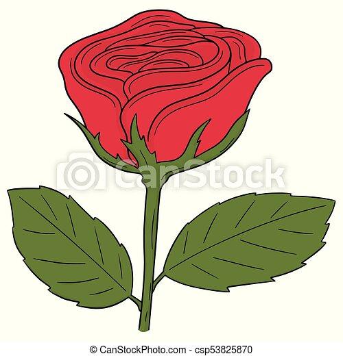 vector set of rose - csp53825870