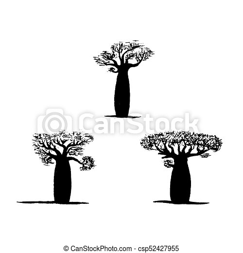 Vector Set Of Three Hand Drawing Black Baobabs On White Background Vector Silhouette Of Baobab