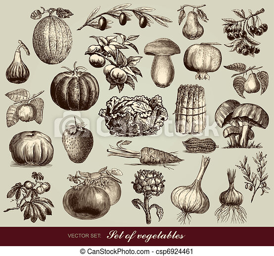 Vector set of vegetables - csp6924461