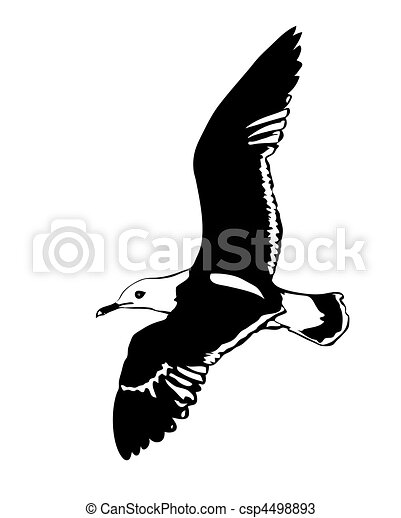 vector silhouette flying sea gulls on white background - csp4498893
