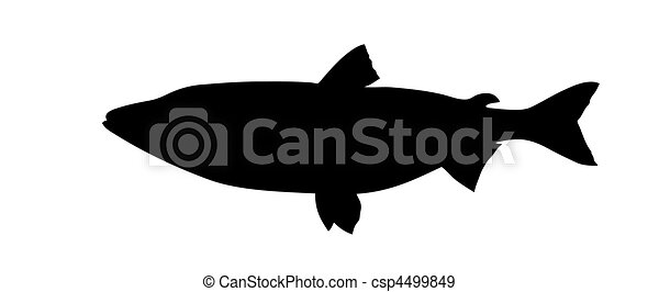 vector silhouette of fish on white background - csp4499849
