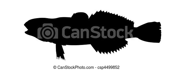 vector silhouette of fish on white background - csp4499852