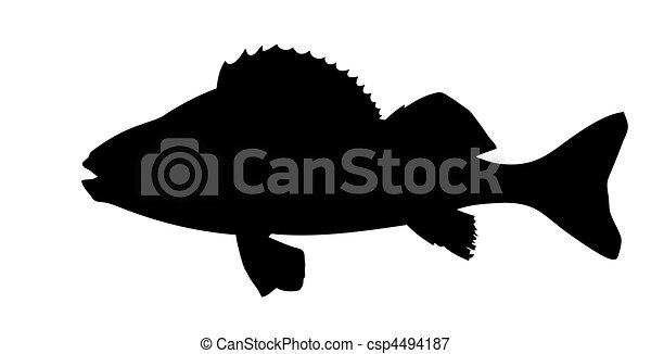 vector silhouette of fish on white background - csp4494187