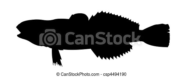 vector silhouette of fish on white background - csp4494190
