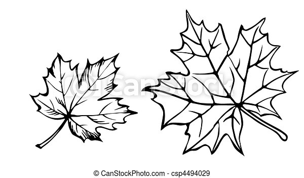 vector silhouette of the maple leaf on white background - csp4494029