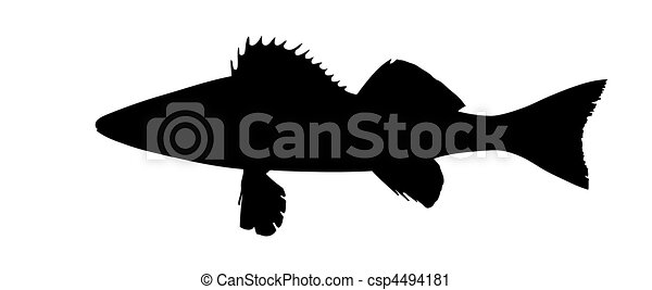 vector silhouette of the pike perch on white background - csp4494181