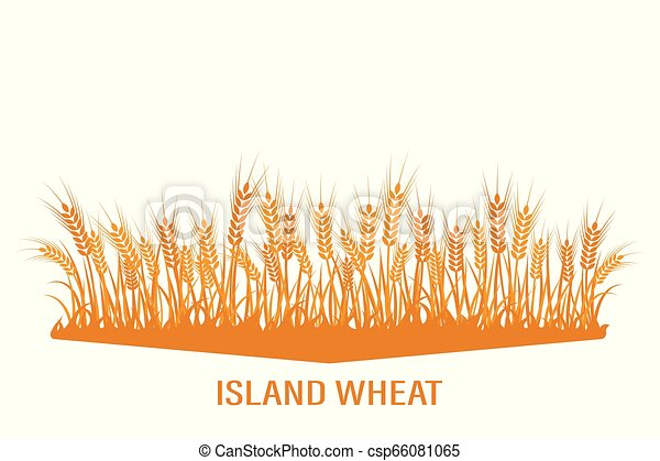 Vector silhouette of wheat. Wheat in the field on a white background. - csp66081065