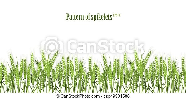 Vector silhouette of wheat. Wheat in the field on a white background. - csp49301588