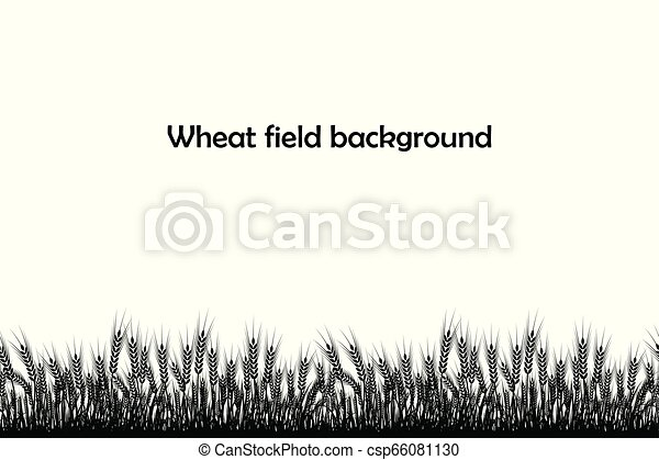 Vector silhouette of wheat. Wheat in the field on a white background - csp66081130