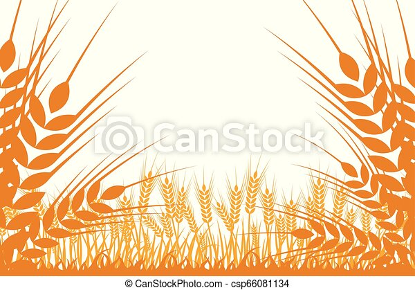 Vector silhouette of wheat. Wheat in the field on a white background - csp66081134