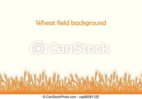 Vector silhouette of wheat. Wheat in the field on a white background - csp66081125