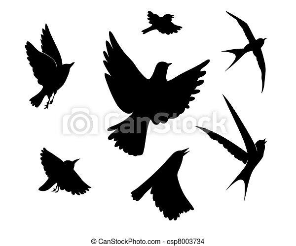vector, silhouette, vliegen, illustratie, achtergrond, witte , vogels - csp8003734