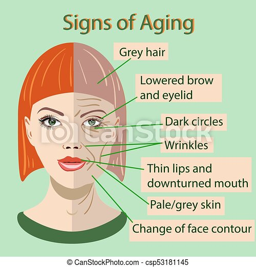 Vector sing of aging face with two types of skin, young and old - csp53181145