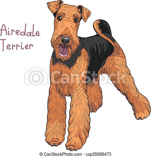 vector sketch dog Airedale Terrier breed - csp35568473