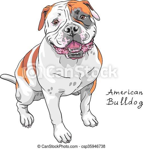 vector sketch dog American Bulldog breed - csp35946738