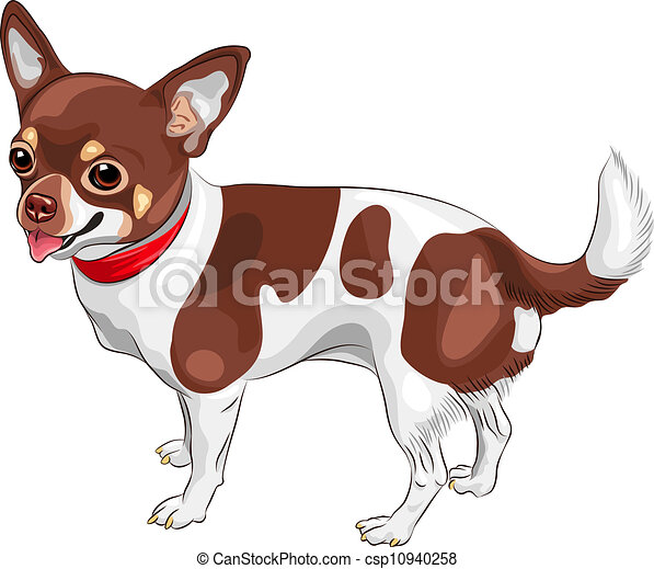 vector sketch dog chihuahua breed smiling color sketch of rh canstockphoto com chihuahua clipart png chihuahua clipart black and white