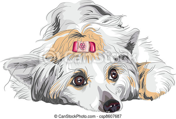 vector sketch dog Chinese Crested breed - csp8607687