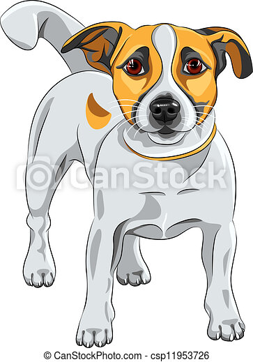 vector sketch dog Jack Russell Terrier breed  - csp11953726