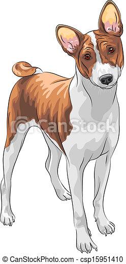vector sketch hunting dog Basenji breed - csp15951410
