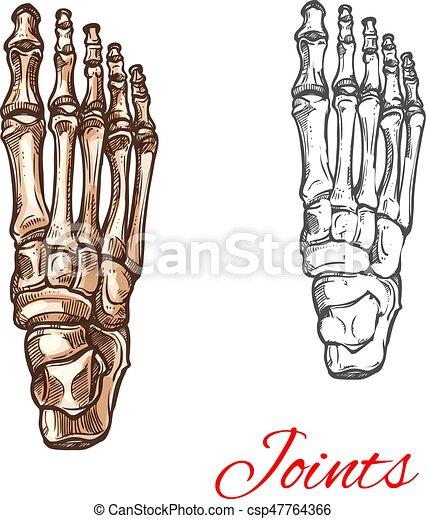 Vector sketch icon of human foot bones or joints. Human foot bones ...
