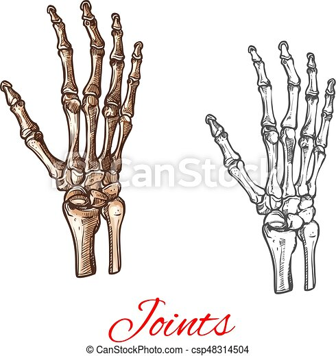 Vector sketch icon of human hand bones or joints. Human hand bones ...